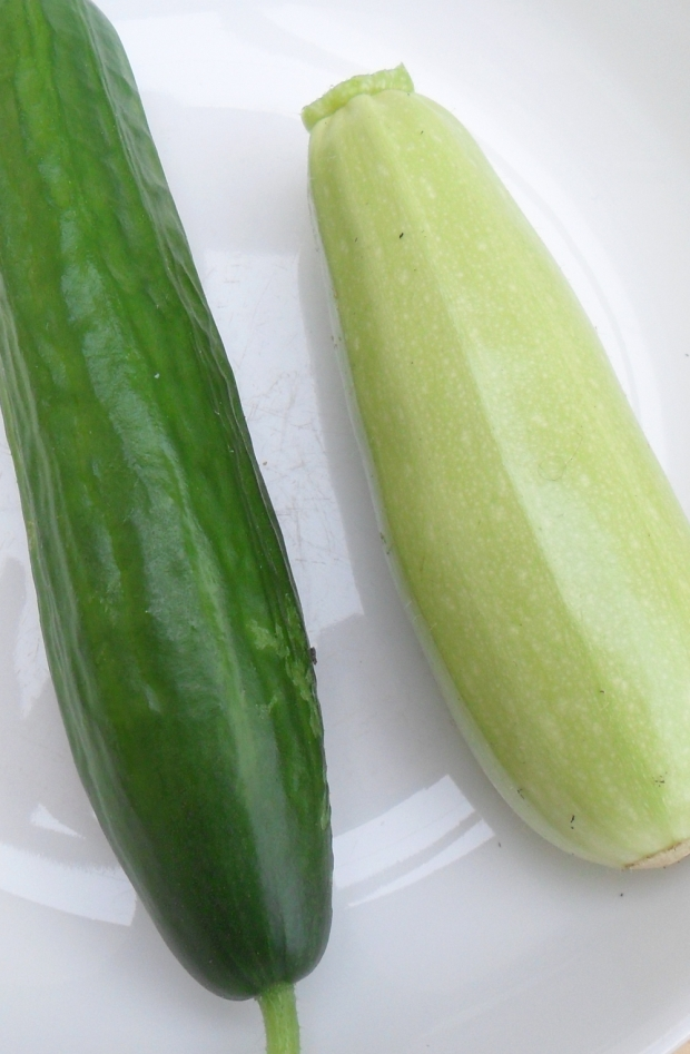 Some kind of cucumber and Trieste White courgette